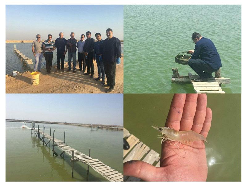 کارگاه آموزشی شرکت زیست درمان ماهان در مزارع پرورش میگوی استان بوشهر