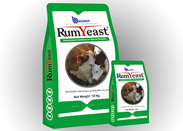 Livestock yeast- Animal Yeast- Saccharomyces cerevisiae live yeast for ruminants (RumYeast)